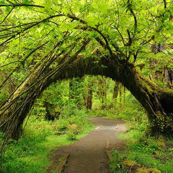 Живая арка