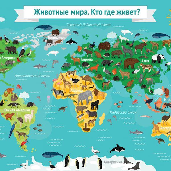 Животные мира 1