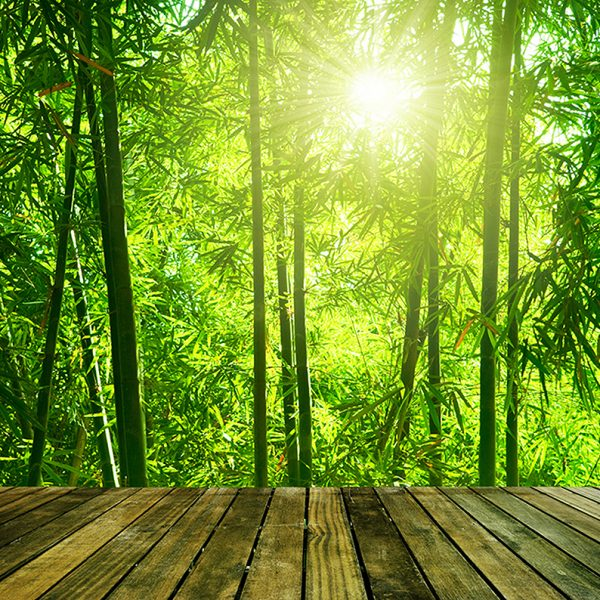 Выход в бамбуковую рощу
